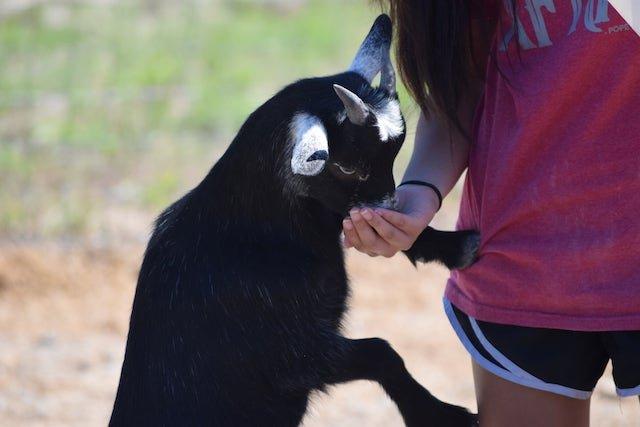 Buena_Vista_Petting_zoo-ToniRejcek.JPG