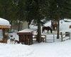 13 Deer & Horses 1.jpg
