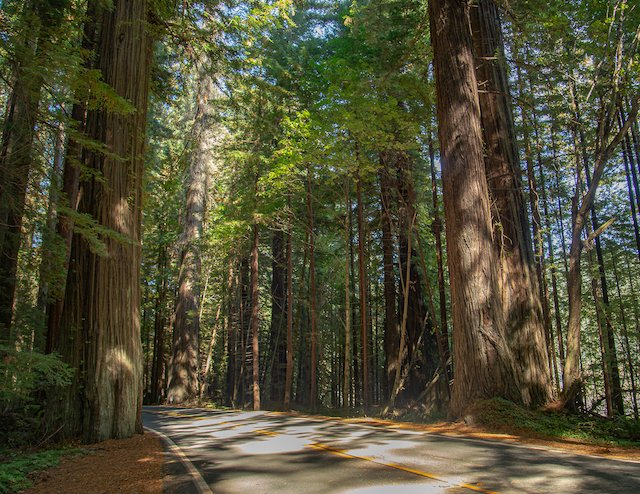 2 RV Tips Roads Photo Jason Betzing Redwoods 1.jpg