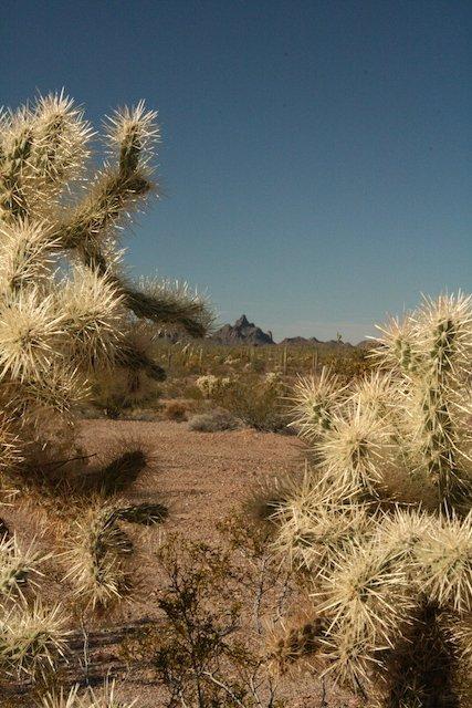 6 Arizona Boondocking Photo William Ennis.JPG
