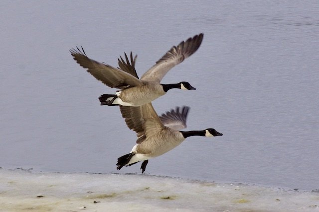 6 Kamloops Photo Tom Skinner.jpeg