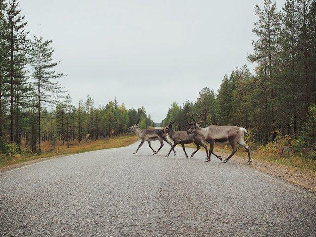 2 Wildlife Photo Photo by Zoya Loonohod on Unsplash.jpg