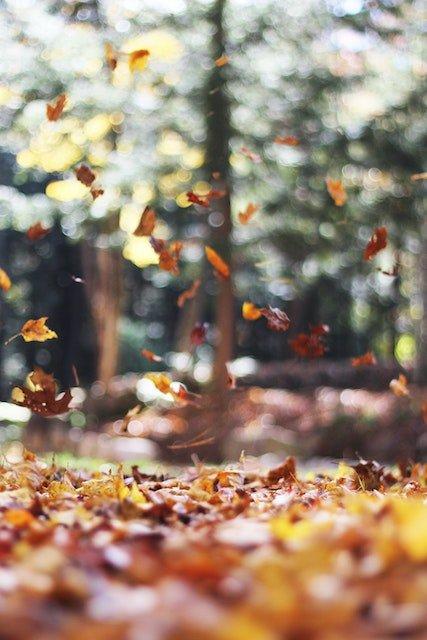 Lead Smart RVing Fall Camping Photo Mott Rodeheaver unsplash.jpg