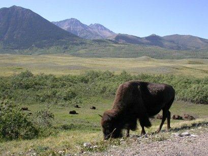 Wood Buffalo National Park Suncruiser