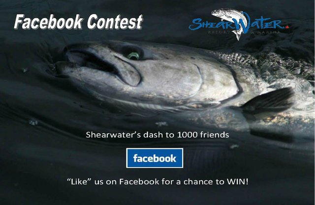 Shearwater Facebook Contest