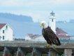 Fort Worden eagle.JPG