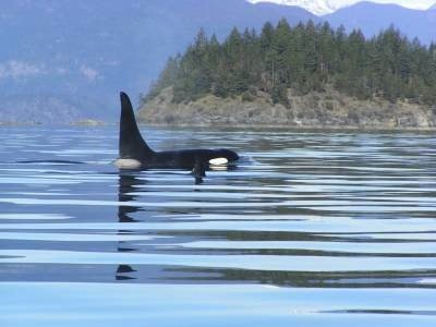 SunLund By-The-Sea Orca