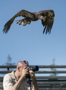 herc over photographer - kerri jo.jpg