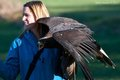 Robyn & Golden Eagle (1 of 1).jpg