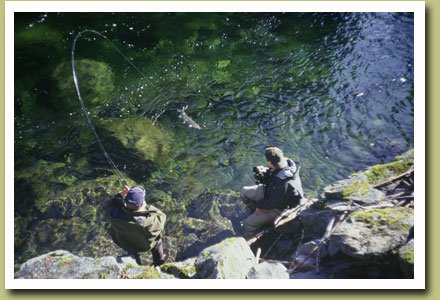 Steelhead Fishing in Northern B.C.