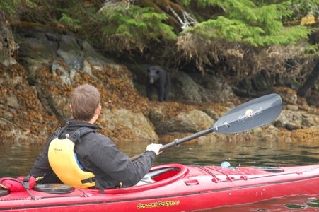 bear and Kayak copy.JPG