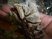 quagga mussel shells_LScott.JPG