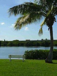 palm-tree-view-web.jpg