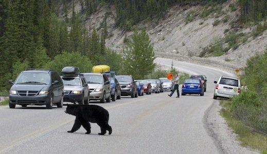 Jasper National Park credit Parks Canada James McCormick.jpg