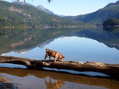 cheena at Dodd lake photo Barb Rees.jpg
