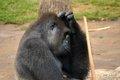 Gladys Porter Zoo 1 Joel Salazar.jpg