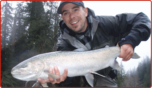 Stamp River Steelhead